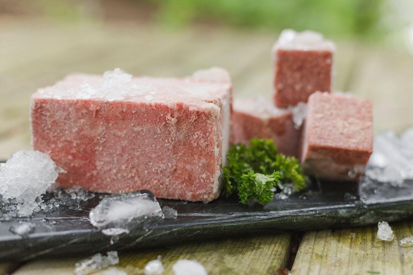 Alimentation crue-vermelho-Settre Irlandais